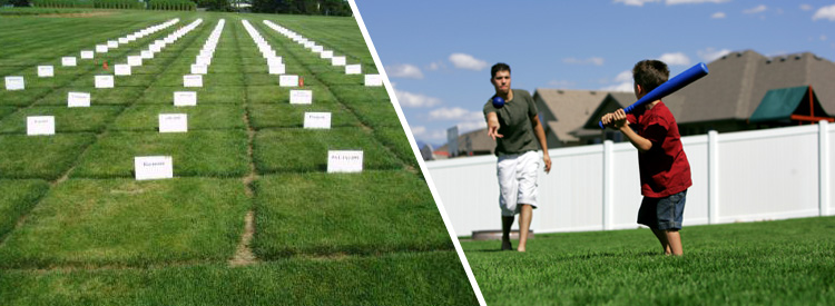 Selecting The Right Grass